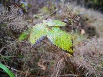 Autumn leaf. Color Royalty Free Stock Photos