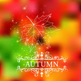 Autumn leaf color background illustration Royalty Free Stock Image