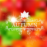 Autumn leaf color background illustration Royalty Free Stock Photos