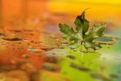 Autumn leaf with colorful drops Stock Photo