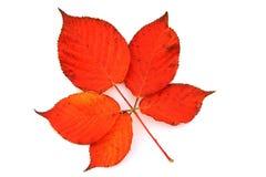 Autumn Leaf colorido Fotografía de archivo libre de regalías