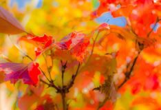 Autumn leaf colors in a garden in sunlight Royalty Free Stock Photography