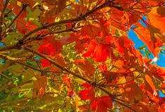 Autumn leaf colors in a garden in sunlight Stock Images