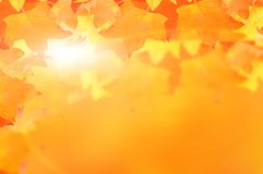 Autumn leaf colors isolated for background. Autumn leaf colors isolated in wite for background royalty free stock photos