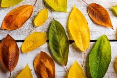 Autumn Leaf Composition Arkivbild