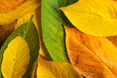 Autumn Leaf Composition Royaltyfri Bild