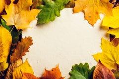 Autumn Leaf Composition Imagen de archivo libre de regalías
