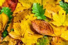 Autumn Leaf Composition Imágenes de archivo libres de regalías