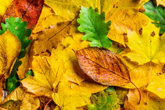 Autumn Leaf Composition Royaltyfria Bilder