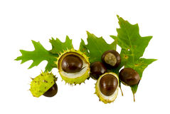 Autumn leaf composition with chestnuts and shell Stock Photos