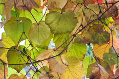 Autumn Leaf Composition Royalty Free Stock Images