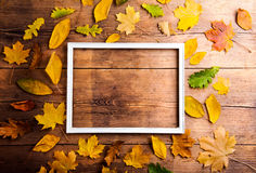 Autumn leaf composition Royalty Free Stock Photo