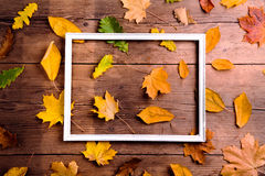 Autumn leaf composition. Stock Photos