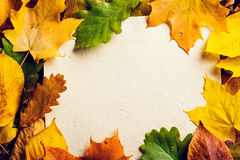 Autumn leaf composition Royalty Free Stock Image
