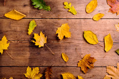Autumn Leaf Composition Studio som skjutas på träbakgrund Arkivfoton