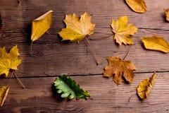 Autumn Leaf Composition Studio som skjutas på träbakgrund Fotografering för Bildbyråer