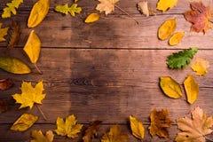 Autumn Leaf Composition Studio som skjutas på träbakgrund Arkivfoto