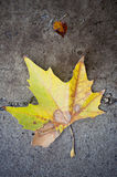 Autumn leaf on concrete wet pavement. Autumn yellow leaf fallen on wet pavement Stock Photography