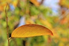 Autumn Leaf - cores no fundo da natureza - beleza dourada Fotos de Stock