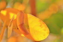 Autumn Leaf - cores no fundo da natureza - simplicidade dourada Fotos de Stock