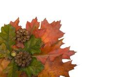 Autumn leaf corner with cones stock photography