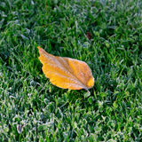 Autumn leaf covered with frost. Stock Images