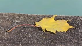 Autumn Leaf d'or coloré banque de vidéos