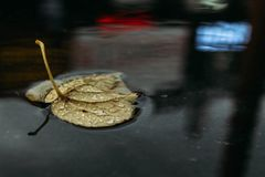 Autumn leaf in a puddle with reflections of show-windows stock images