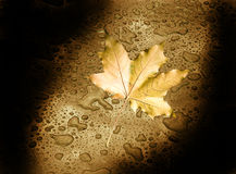 Autumn leaf in the darkness Royalty Free Stock Photos