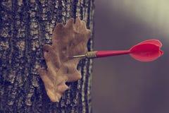An autumn leaf. Autumn leaf and dart darts Stock Photography