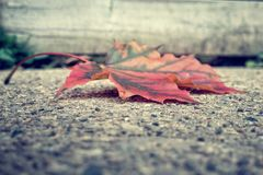 Autumn leaf detail royalty free stock images
