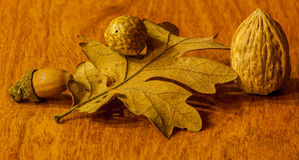 Autumn leaf with different kind of nuts Royalty Free Stock Images