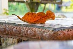 Autumn Leaf. A dried orange leaf on a terra cotta bench Stock Photography