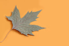 Autumn leaf. The autumn, dried leaf on a yellow background Royalty Free Stock Images