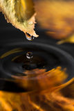 Autumn leaf with a drop over water Stock Images