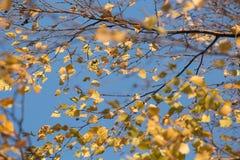Autumn leaf. Dry autumn leaves over blue sky royalty free stock photos