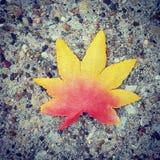 Autumn Leaf em cores amarelas e vermelhas do inclinação Fotografia de Stock Royalty Free