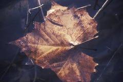 Autumn Leaf en el agua, Boulder, Colorado Fotos de archivo