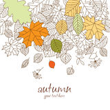 Autumn leaf fall. Vector background - autumn leaf fall Royalty Free Stock Image