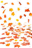 Autumn leaf fall Stock Photos