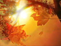 Autumn leaf fall Royalty Free Stock Image