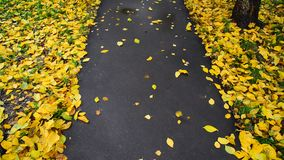 Autumn leaf fall in city park, Russia stock footage