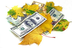 Autumn leaf fall of dollars on a white background. Dollars together with yellow leaves on a white background Stock Images