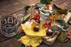 Autumn leaf fall Stock Image