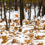 Autumn leaf fall. Leaves and tree branches on snow. Royalty Free Stock Images