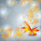 Autumn leaf fall, nature background. Autumn leaf fall, beautiful grey nature background, vector illustration. Place for text Royalty Free Stock Photo