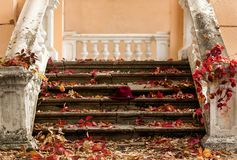 Autumn leaf fall. Red and yellow leaves on the destroyed old stone steps burgundy (marsala color) hat. Autumn leaf fall. Red and yellow leaves on the destroyed royalty free stock images