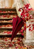 Autumn leaf fall. Red and yellow leaves on the destroyed old stone steps burgundy (marsala color) umbrella. Autumn leaf fall. Red and yellow leaves on the royalty free stock photos
