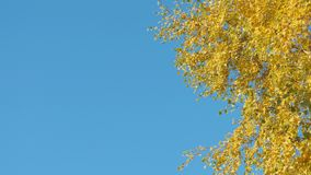 Autumn leaf fall on a sunny day stock footage