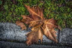Autumn Leaf. A fallen leaf in autumn Royalty Free Stock Photos